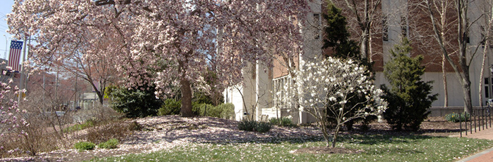 Willard Hall in springtime