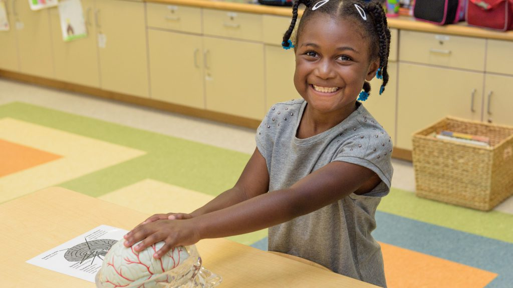 A young girl enjoys a science activity on the human brain the College of Education and Human Development's Laboratory Preschool summer camp.
