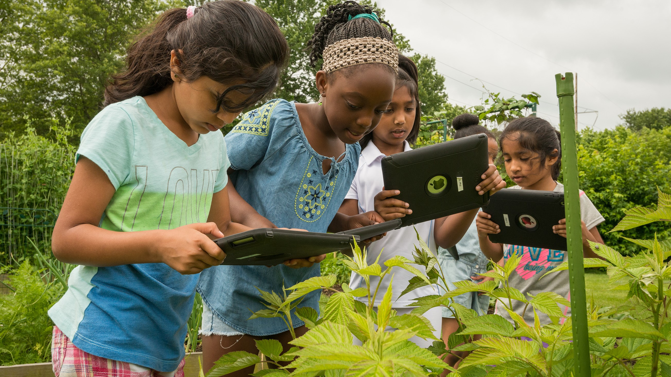 A group of girls use iPads to study plants outside in one of CEHD's summer camps.